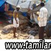 Situation_Report_8th_May_2009_TamilNational_04